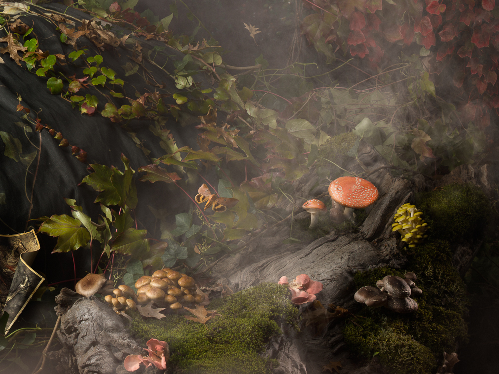 Real mushrooms on the set of Into the Gloaming