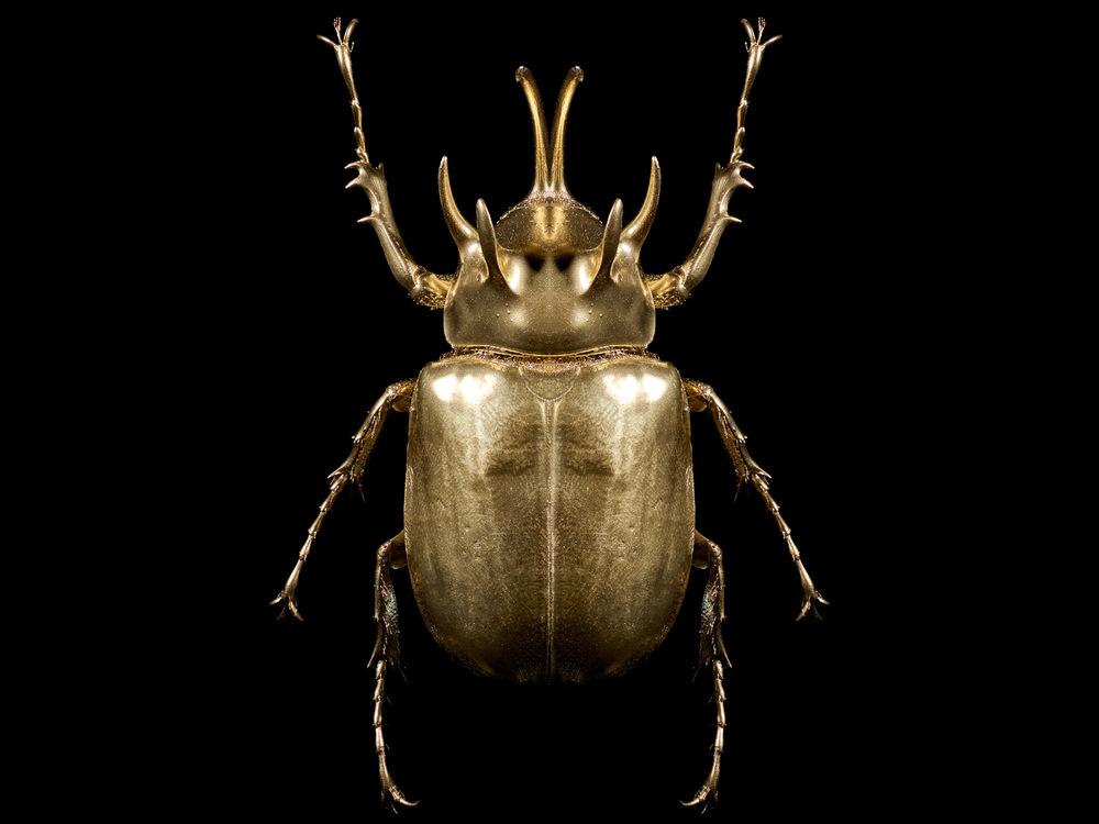 2015 alexia sinclair the golden scarab